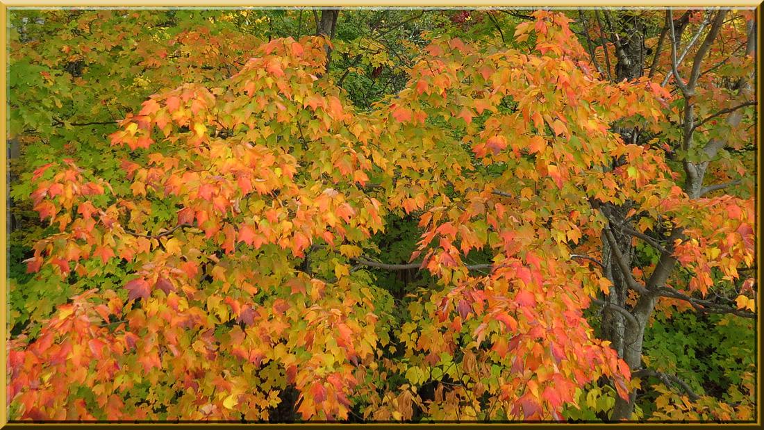 Tremblant, feuillages d'automne