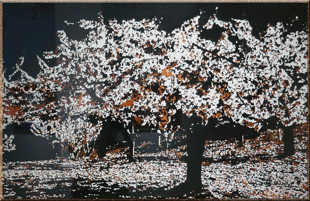 Debisschop-cerisier-en-fleurs